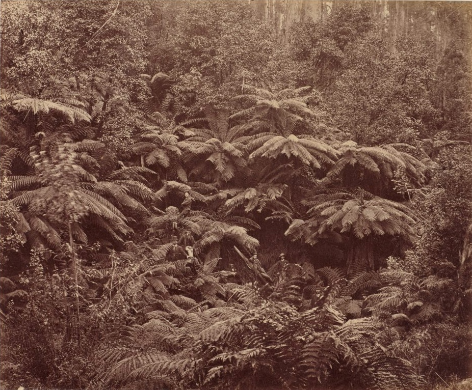 Anson Bros Studio Fern Tree Gully, Hobart Town, Tasmania 1887 17.4 x 21.1 cm Art Gallery of New South Wales, gift of Josef & Jeanne Lebovic, Sydney 2014